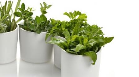 גינת צמחי מרפא - ארון תרופות טבעי