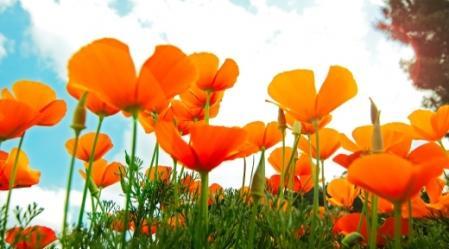 סדרת פרחי באך כוללת 38 תמציות המופקות מפרחי בר, עצים או שיחים.
