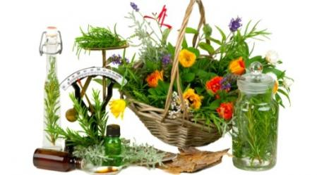 סוד צמחי המרפא